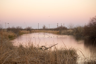 Local Birding area